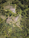 Indonesia, Bali, Ubud, Aerial view of rice fields - KNTF02026