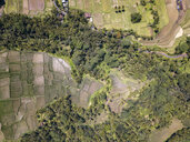Indonesia, Bali, Ubud, Aerial view of rice fields - KNTF02029