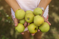 Woman holding harvested apples - JUNF01453