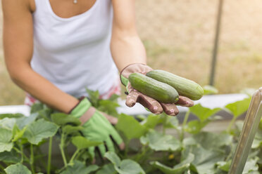 Close-up of woman harvesting cucumbers at raised bed - JUNF01468