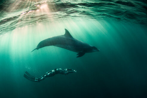 Woman free-diving with Bottlenose dolphin (Tursiops truncates), underwater view, Doolin, Clare, Ireland - CUF44843
