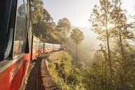 Kalka–Shimla Railway in forest in India - LUXF00783