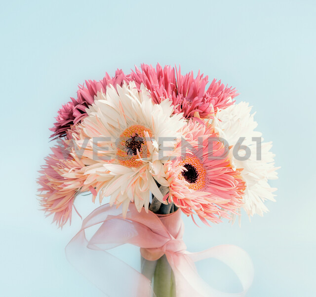 Close-up shot of a pink flower against a pale blue background - INGF00096