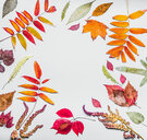 Close-up of autumn maple leaves on a white background - INGF01080