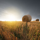 Hay bales on a field during a sunny day - INGF01278