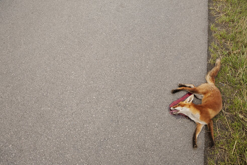 View from above dead red fox at roadside - FSIF03279