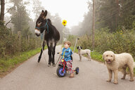 Cute girl riding tricycle on rural road with donkey and dogs - FSIF03324