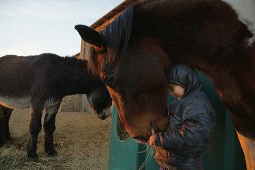 Girl feeding horse - FSIF03354