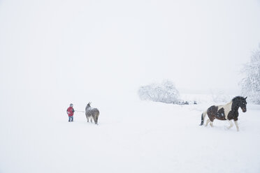 Girl in snowy field with donkey and horse - FSIF03357
