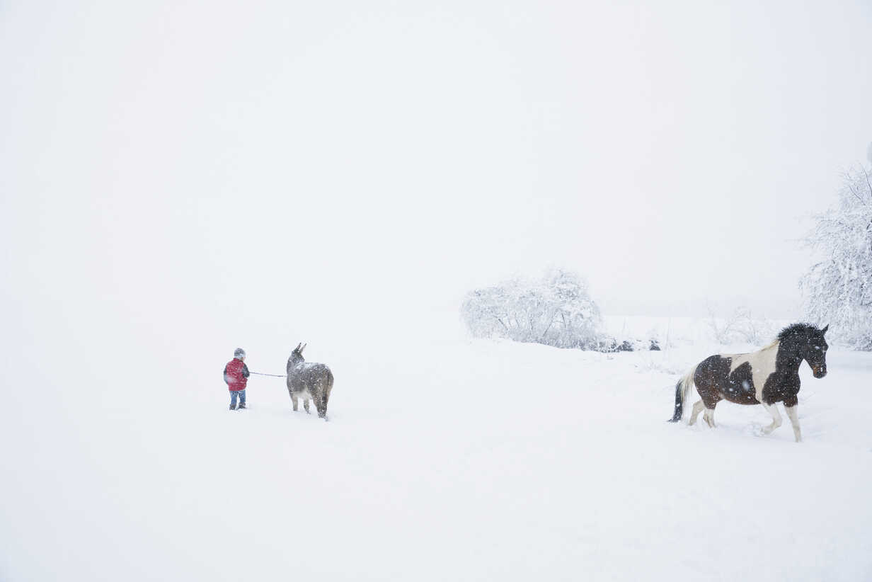 Girl in snowy field with donkey and horse - FSIF03357 - Julia Christe/Westend61