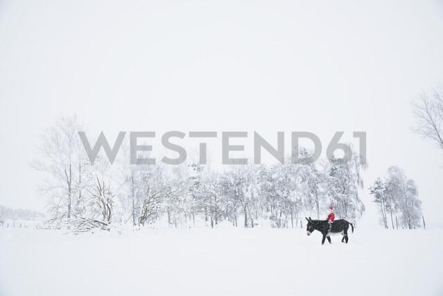 Girl in Santa hat riding donkey in snowy field - FSIF03384