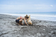 Full length of woman and Labrador Retriever digging on shore at beach - CAVF49238