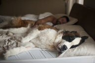 Man sleeping with dog on bed at home - CAVF49304