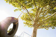 Low angle view of tire hanging from branch at park during sunny day - CAVF49413