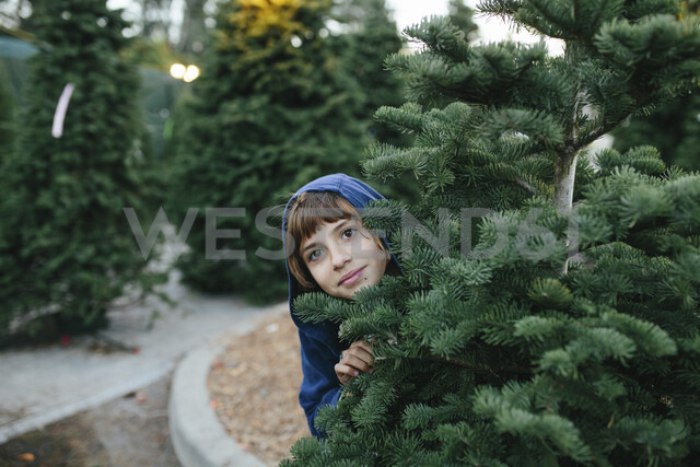 Portrait of cute girl standing by pine tree at farm during Christmas - CAVF49517
