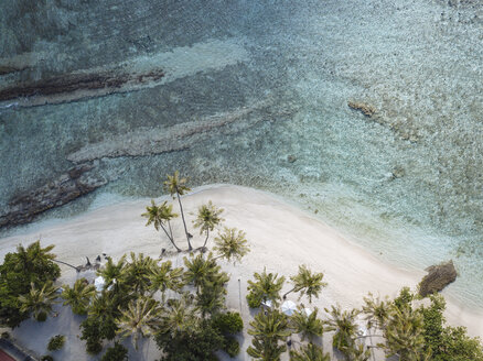 Aerial view of palm trees growing at beach - CAVF49568