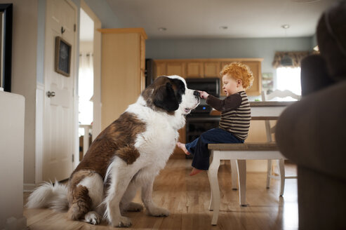 Side view of baby boy touching dog's while sitting on chair at home - CAVF49595