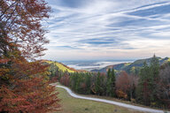 Germany, Upper Bavaria, Aschau, Autumn forest, View to Chiemsee in the evening - HAMF00510