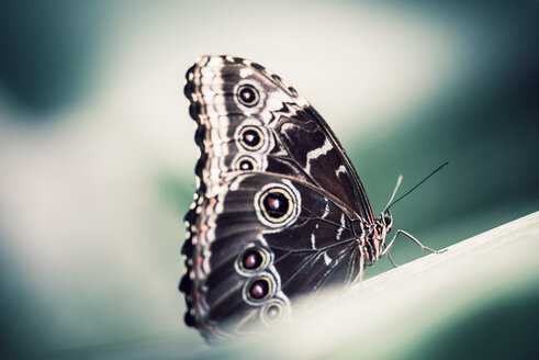 Close-up of butterfly - INGF01843