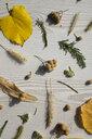 Autumn fruits on a wood - MOMF00527