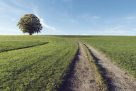 Diminishing perspective of trail amidst grassy field against blue sky during sunny day - CAVF49823