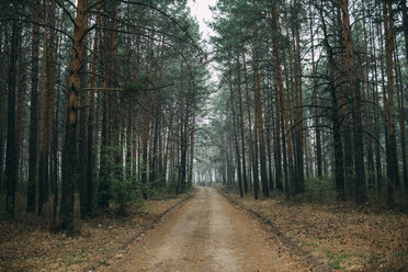 Empty forest track through pines - VPIF00924