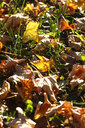 Autumn foliage lying on meadow - JTF01115