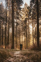 Person walking through the forest - INGF02543