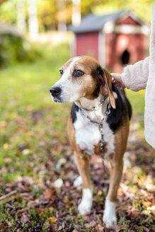 Portrait of dog in autumnal garden - PSIF00122