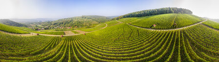 Germany, Baden-Wurttemberg, Aerial view of vineyards At Gundelsbach Valley - STSF01767