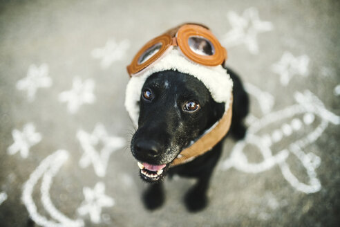 Portrait of black dog wearing flying goggles and hat - HAPF02791