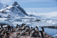 Penguins and sea lions on rocks by frozen sea against sky - CAVF51122
