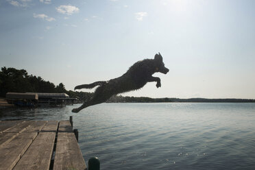 Side view of dog jumping into lake against sky - CAVF51146
