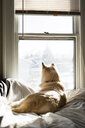 Rear view of dog looking through window while sitting on bed at home - CAVF51318