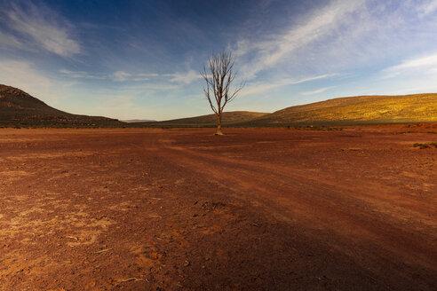 Africa, South Africa, landscape - ZEF16043