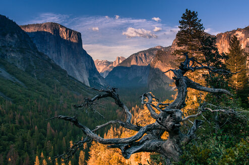 Yosemite National Park, California, USA - ISF20024