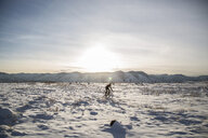 Man riding bicycle on snow covered landscape against sky - CAVF51543