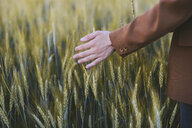 Cropped hand of woman touching crops at farm - CAVF51648
