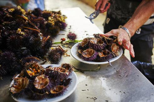 Man preparing and arranging fresh sea urchins - DIK00298