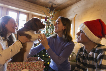 Family playing with dog in Christmas gift box - HOXF03960