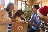 Family playing with dog in Christmas gift box - HOXF03966