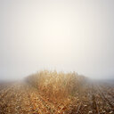Tranquil scene of foggy weather covering crops in a field - INGF04656