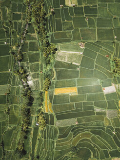 Indonesia, Bali, Aerial view of rice fields from above - KNTF02292