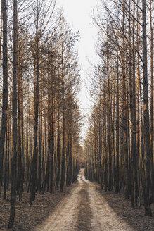 Germany, Brandenburg, Treuenbrietzen, Forest, slash and burn, empty forest road - ASCF00905