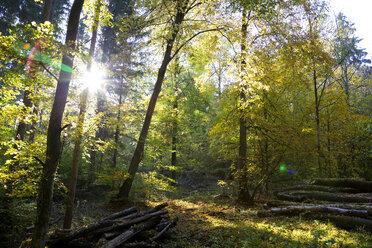 Germany, Bavaria, near Wuerzburg, Gramschatzer Wald in autumn - NDF00822
