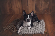 High angle portrait of dog sitting on rug at home - CAVF52354