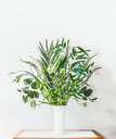 Close-up of a growing potted plant against a white wall - INGF05417