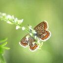 Butterfly on leaf. - INGF05570