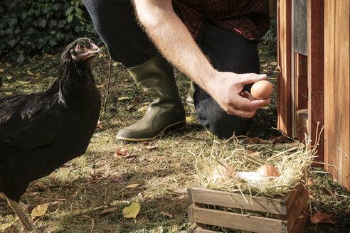 Free-range chicken, hand holding hen's egg - REAF00426