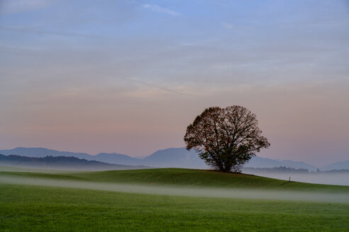 Germany, Pfaffenwinkel, view of landscape with single tree at morning mist - LBF02154
